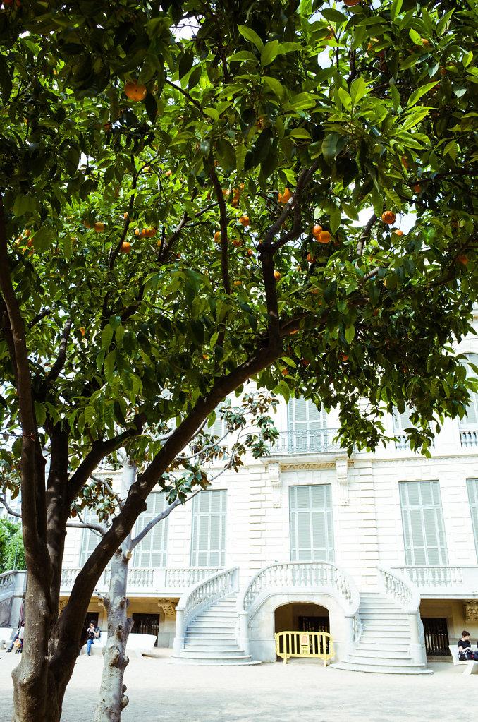 Under the orange tree, Barcelona