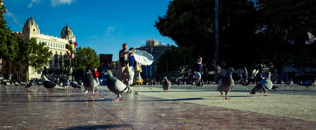 Pigeons secretly rule the world, Barcelona