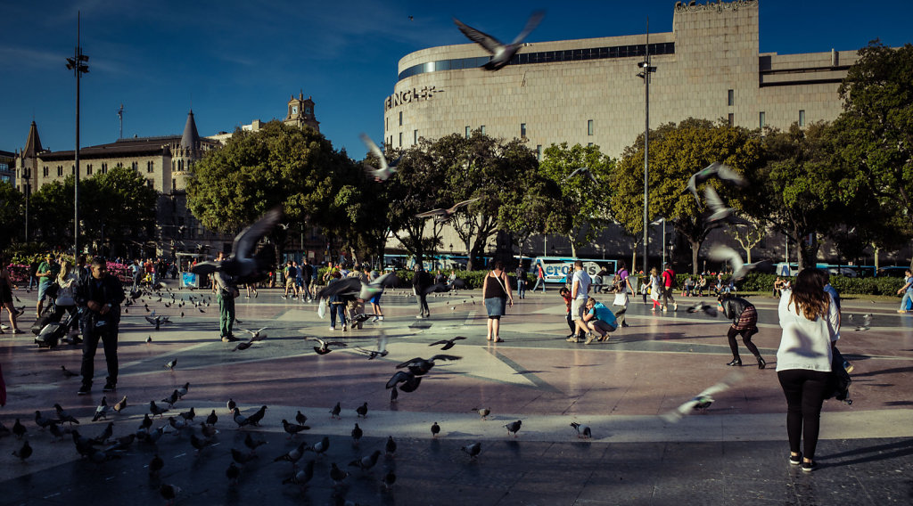 Pigeons, Barcelona