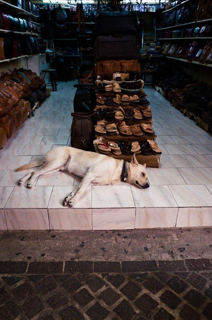 Cretan dog siesta