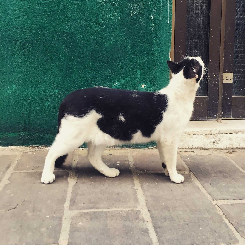 Cretan cat doesn't miss a thing
