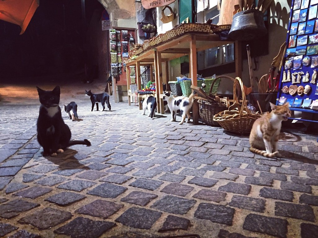 Cretan cat congregation