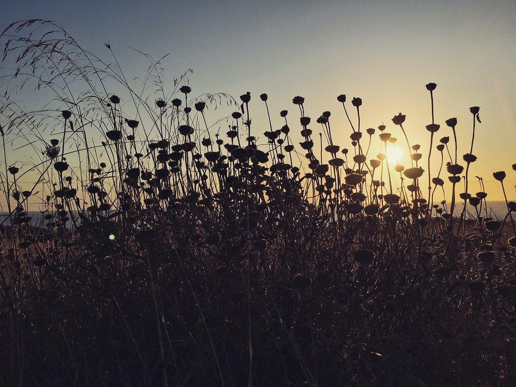 Sun stuck in plants