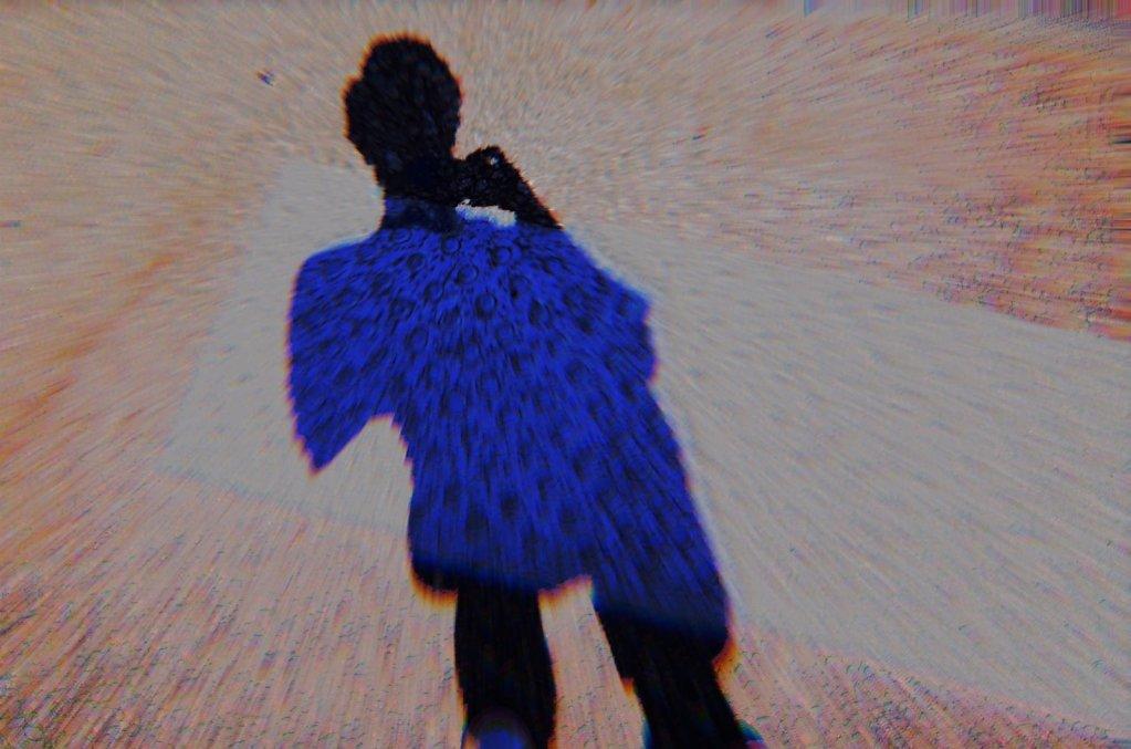 Shadowplaying, Avignon